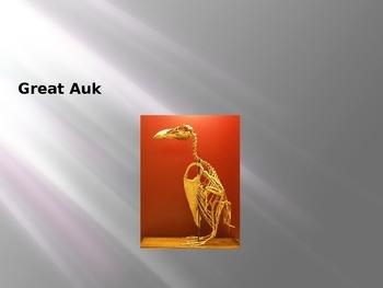 Great Auk