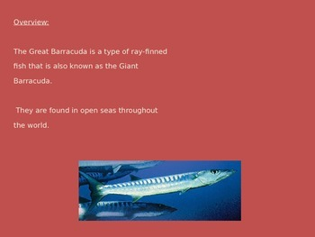 Great Barracuda - Power Point - Information Facts Pictures