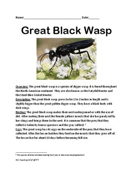 Great Black Wasp - informational article facts lesson - review questions
