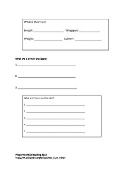 Great Blue Heron - Review Article Questions Vocabulary Activities