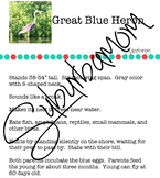 Great Blue Heron - Science - Reading Comprehension- Writing