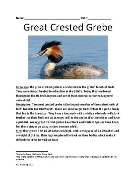 Great Crested Grebe - bird informational article lesson facts questions