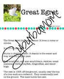 Great Egret- Science- Reading Comprehension- Writing