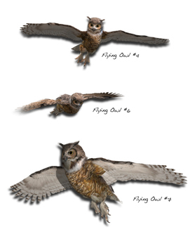 Great Horned Owl Pack #1