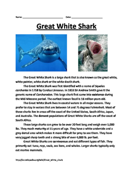 Great White Shark - Lesson Review Article Questions Facts Vocab Word Search