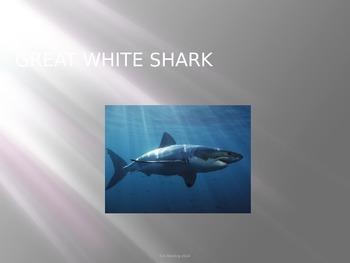 Great White Shark - Power Point -