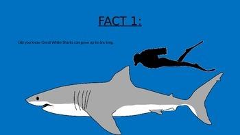 Great White Shark PowerPoint