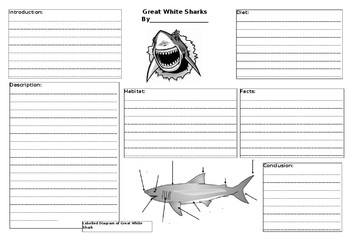 Great White Sharks Information Report Graphic Organiser