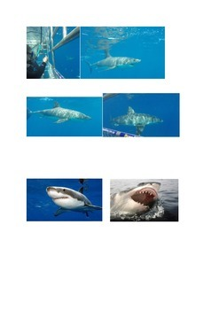 Great White Sharks Information Sheets
