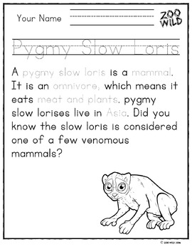 Slow Loris -- 10 Resources -- Coloring Pages, Reading & Activities