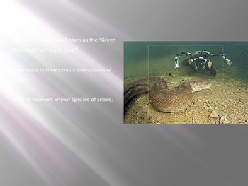 Green Anaconda - Power Point - Information Pictures facts history