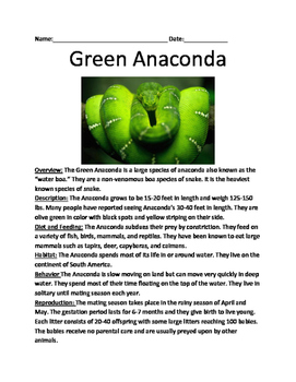 """Green Anaconda - """"water boa"""" informational article questions facts vocab"""