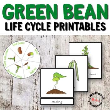 Green Beans Montessori Life Cycle Printables