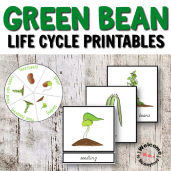 Montessori Inspired Green Beans Life Cycle Printables | TpT