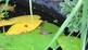 Green Frog, Frog Poop, & Tadpole Photos