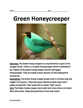 Green Honey Creeper - Bird - Informational Article Questions facts vocabulary