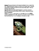 Green Iguana - Informational article facts history questions review word search