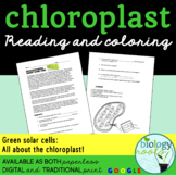 Photosynthesis- Chloroplast Activity