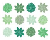 Green Succulent Clipart, Digital Clipart, Green, Flowers,