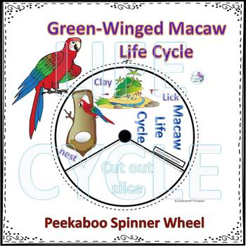 Green-Winged Macaw (Life Cycle Spinner)