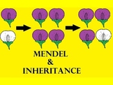 Gregor Mendel and Inheritance