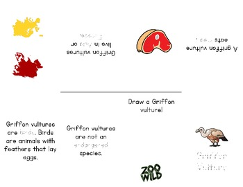 Griffon Vulture -- 10 Resources -- Coloring Pages, Reading & Activities