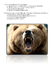 Grizzly Bear Family Book Assessment