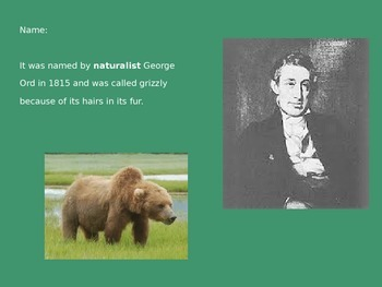 Grizzly Bear - Power Point - History Facts Pictures Information