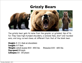 Grizzly Bear Slideshow
