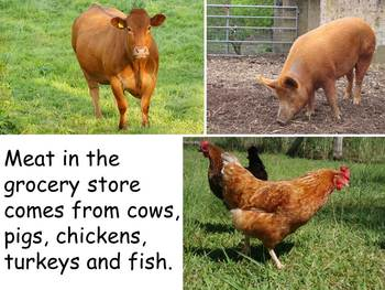 """Grocery Stores Nonfiction PowerPoint """"Book"""" for First or Second Grade"""