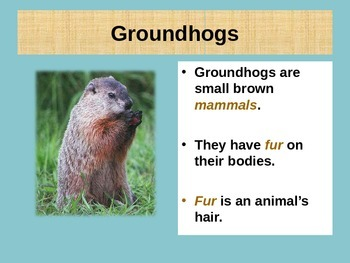 Groundhog Day  Ground hog Day  ESL Presentation ENL
