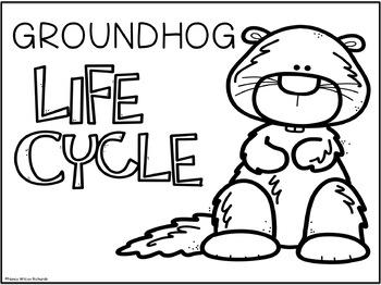 Groundhog Life Cycle