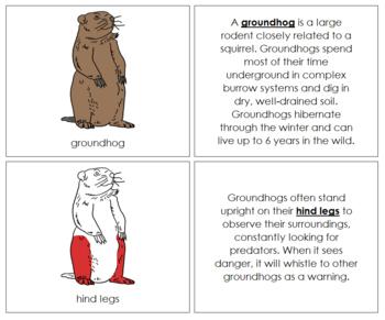 Groundhog Nomenclature Book - Red