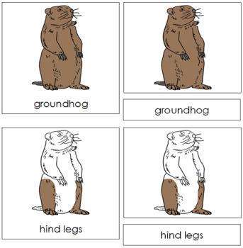 Groundhog Nomenclature Cards