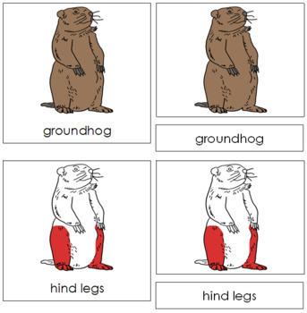 Groundhog Nomenclature Cards (Red)