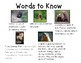 Groundhog Nonfiction Unit for K-2