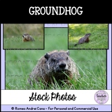 Groundhog Stock Photos - Personal and Commercial Use