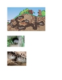 Groundhog images