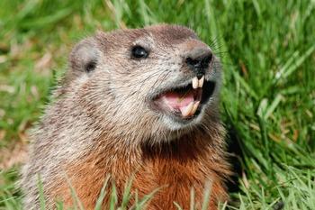 Groundhog's Day SMART Board Lesson (NO PREP!)