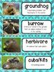 Groundhogs Nonfiction Unit
