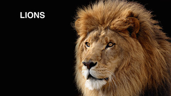 Group Posters - Group 1 - Lions