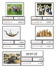 Montessori - Groups Of Animals - Language - Correct Expression