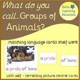 Montessori - Groups Of Animals - Language - Correct Expression
