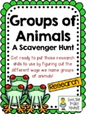 Groups of Animals - Scavenger Hunt Activity and KEY