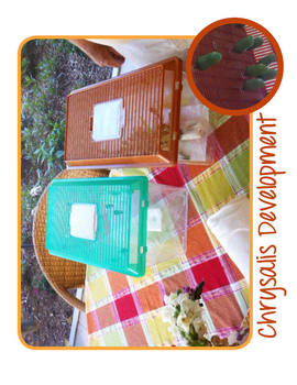 Grow Monarch Butterflies in Your Classroom | Maker Space, Make Project Activity
