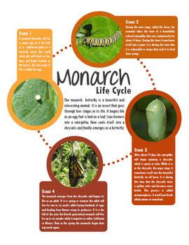 Grow Monarch Butterflies in Your Classroom | Maker Space,