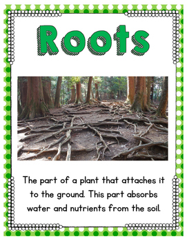 Grow Something Green: A Kindergarten/First Grade Science Unit About Plants