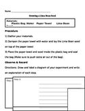 Growing A Lima Bean Seed (Lab Manual)