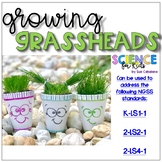 Growing Grassheads! Addresses NGSS K-LS1-1, 2-LS2-1, 2-LS4-1