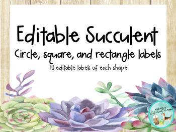 Growing Succulent Decor Bundle